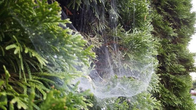Beauty In Nature Close-up Day Green Color Nature Plant Selective Focus Spiderweb Tree Web
