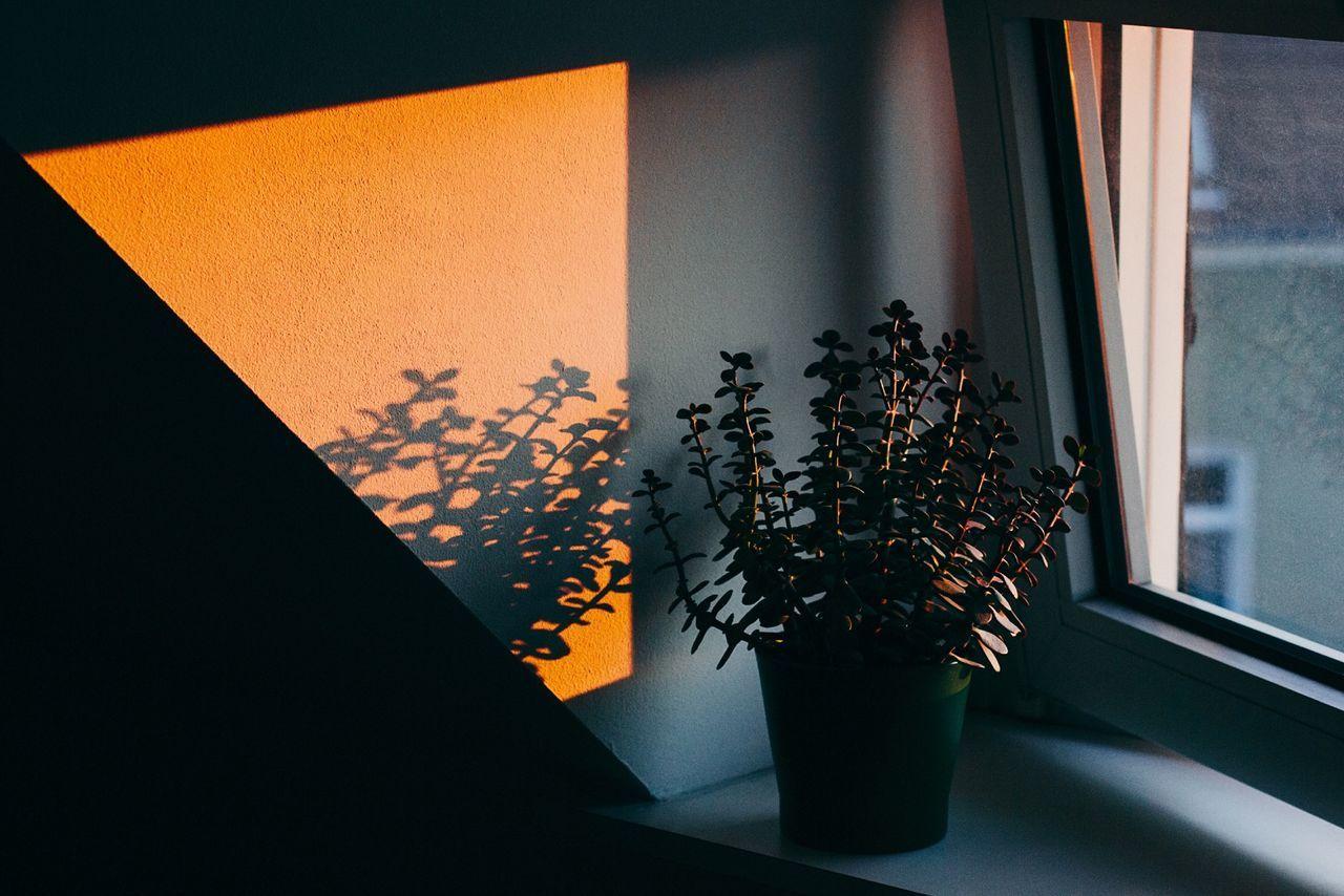 Beautiful stock photos of good morning, Botany, Close-Up, Day, Fragility