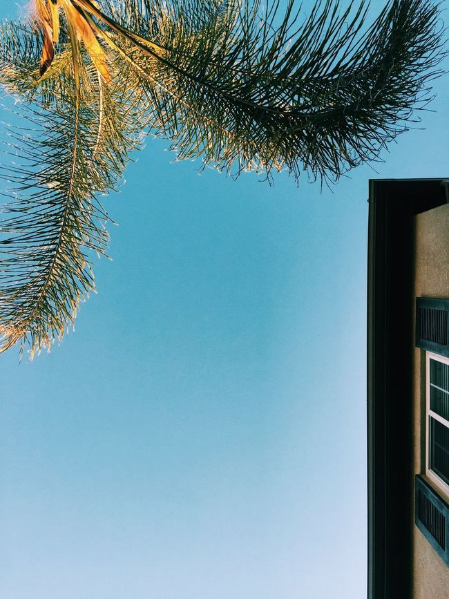 Seeing the World from a different perspective... Vscocam Palm Trees Hello World Chula Vista