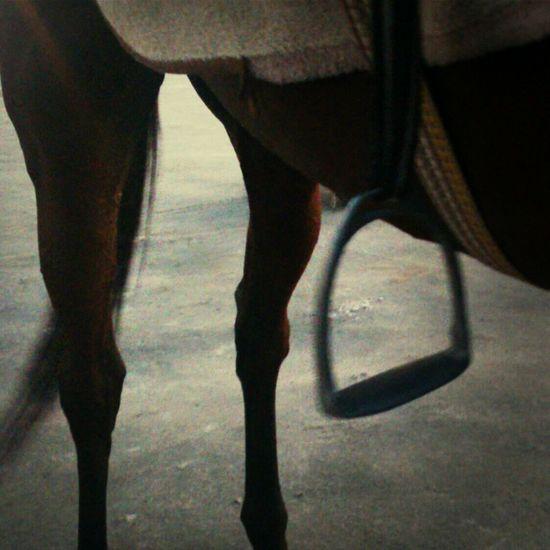 Horses Abstract Dreamy