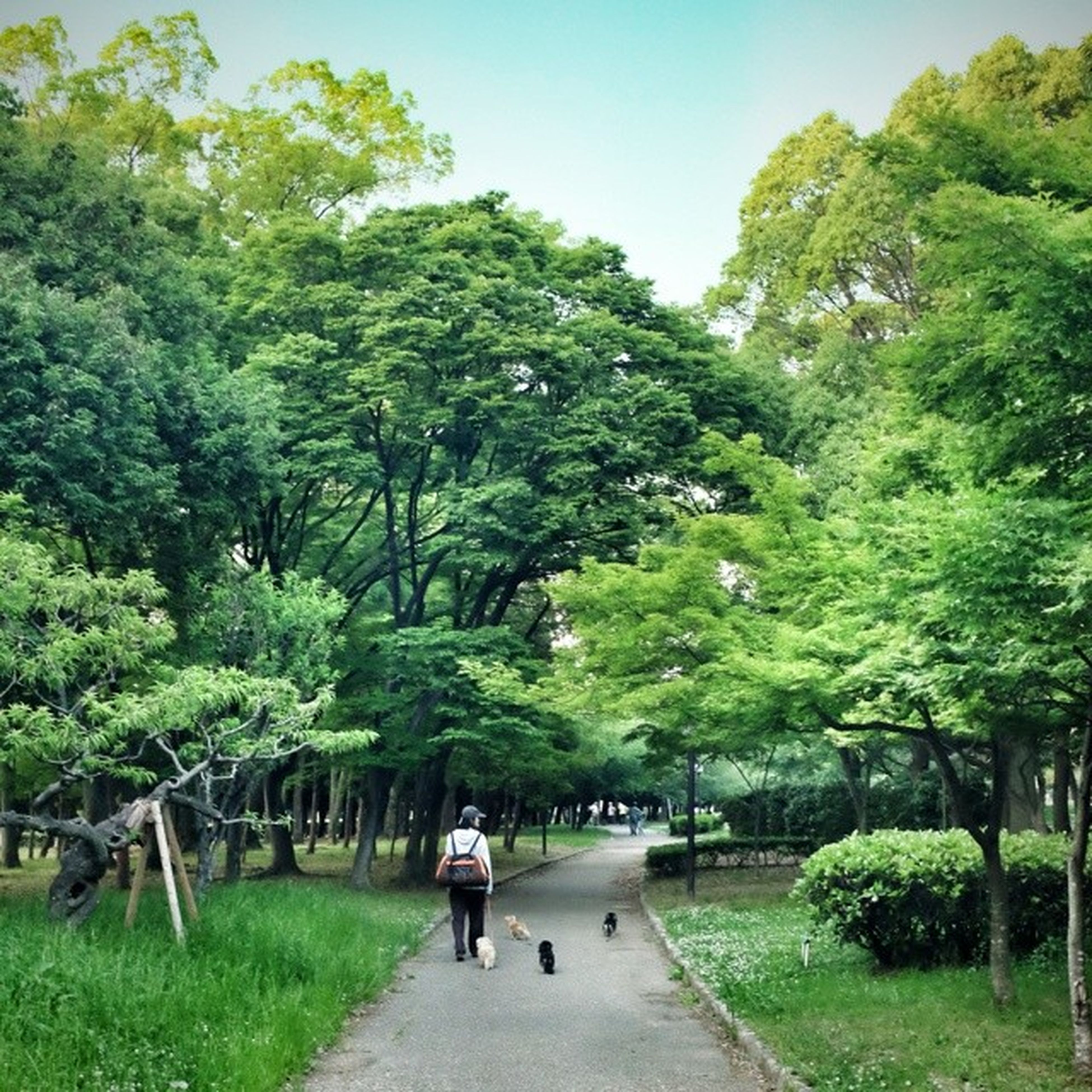 tree, men, lifestyles, rear view, walking, leisure activity, the way forward, full length, togetherness, person, green color, footpath, bonding, park - man made space, growth, grass, nature