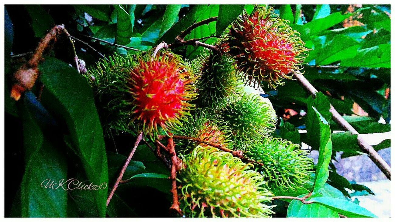 Rambutan Fruit Zenfone Photography