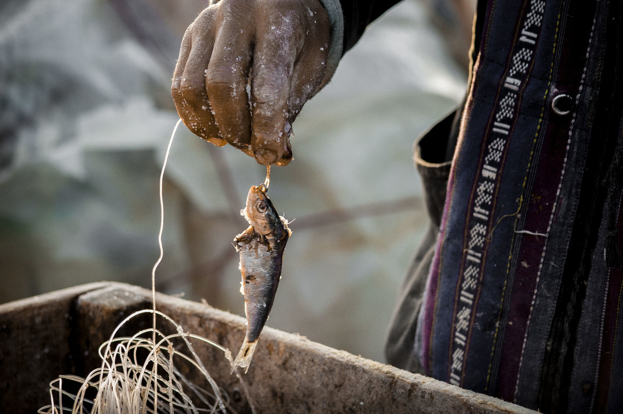 Close-up Fish Fisherman Hand Life Work Fishery  Morocco People One Person Body Part Day Seaside Harbour Life Bate Warm Light