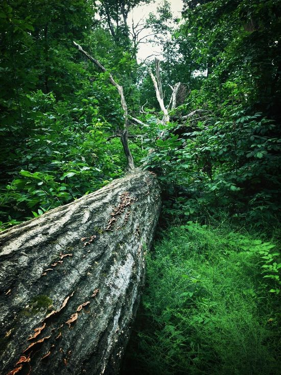 Overcoming adversity can feel like this Tree Fallen Broken Overcomingadversity