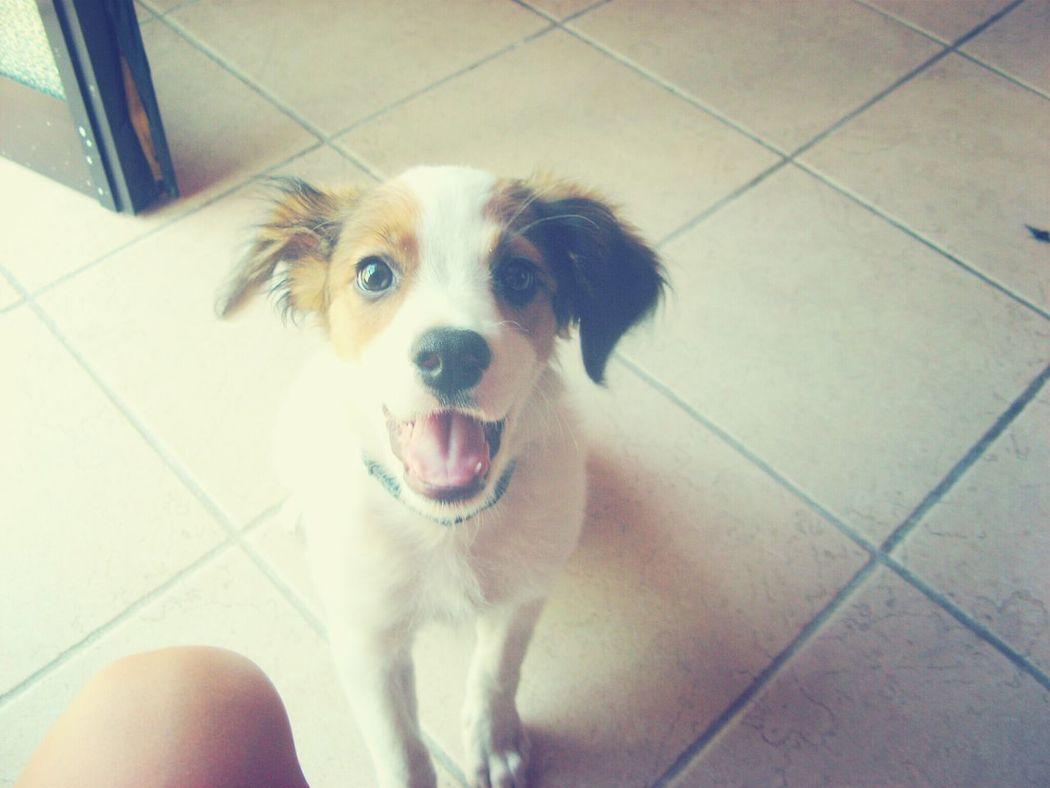 L'amore mio ♥ Dog