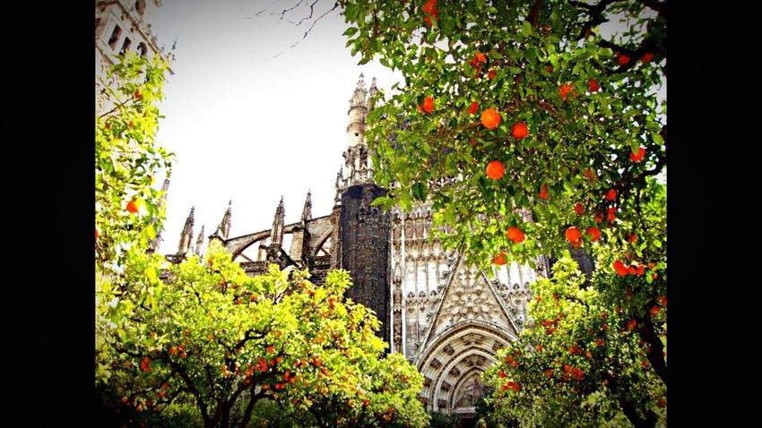Siviglia Sevilla Spagna Andalucía Andalusia Cattedrale Duomo España Mucho Bella Arancia My Passion ❤ My Fotos My Photography