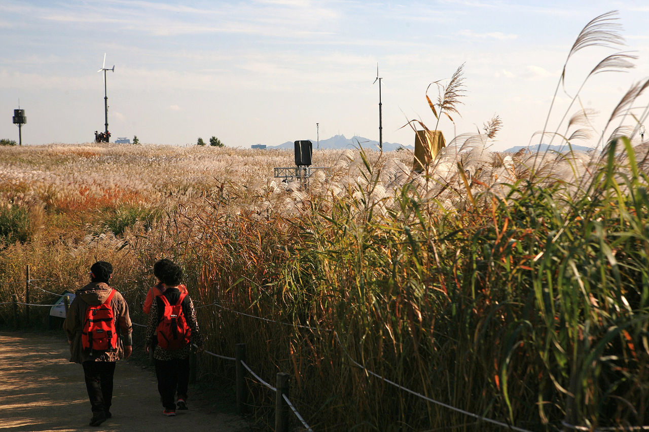 Beautiful stock photos of seoul, , Brown, Horizontal Image, agriculture