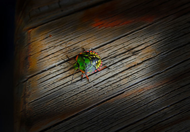 Animal Themes Art Photgraphy Colors Indoors  Insect Insetto Life Life In Motion Natura Nature Nautrelover No People One Animal Photo Nature Reflex Wilde Nature Wildlife Wildlife & Nature Macro Macro Photography Macro Insects