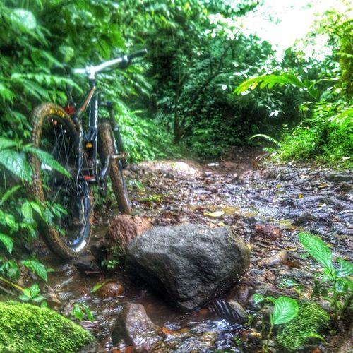 Jalur ngehek 1&2 puncak bogor. Ngehek Puncak  Bogor INDONESIA Bike Bicycle Kona MTB Hardtrail Nature Naturelovers Naturelover Gowes Mangade Kebonteh Green Fresh Bikeforfun