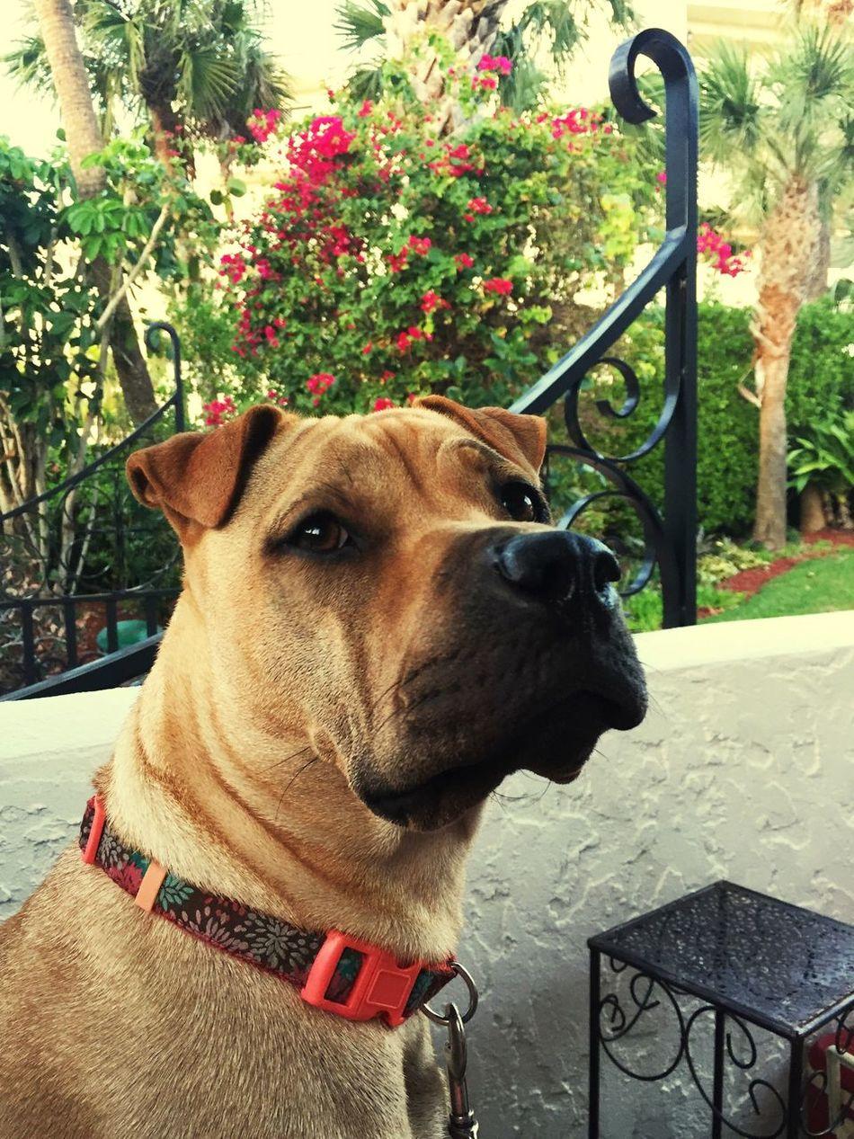 Jazzy my Love 🐾💕🐾💕🐾💕🐾💕🐾 Pets Dog Furbaby Puppy Love ❤ Love❤ Family❤ Petlove  SnuggleBuddies