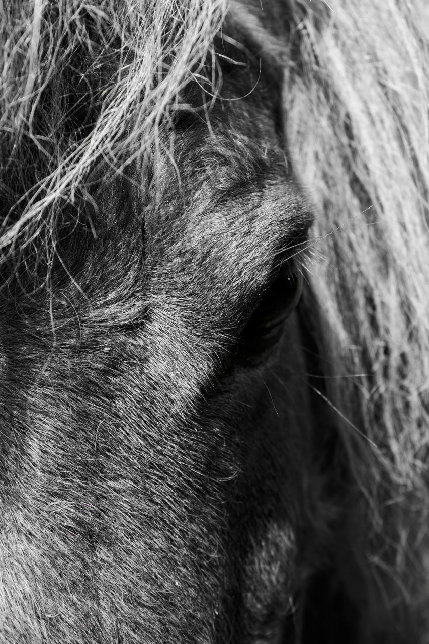 Close-Up Of The Eye Of A Horse
