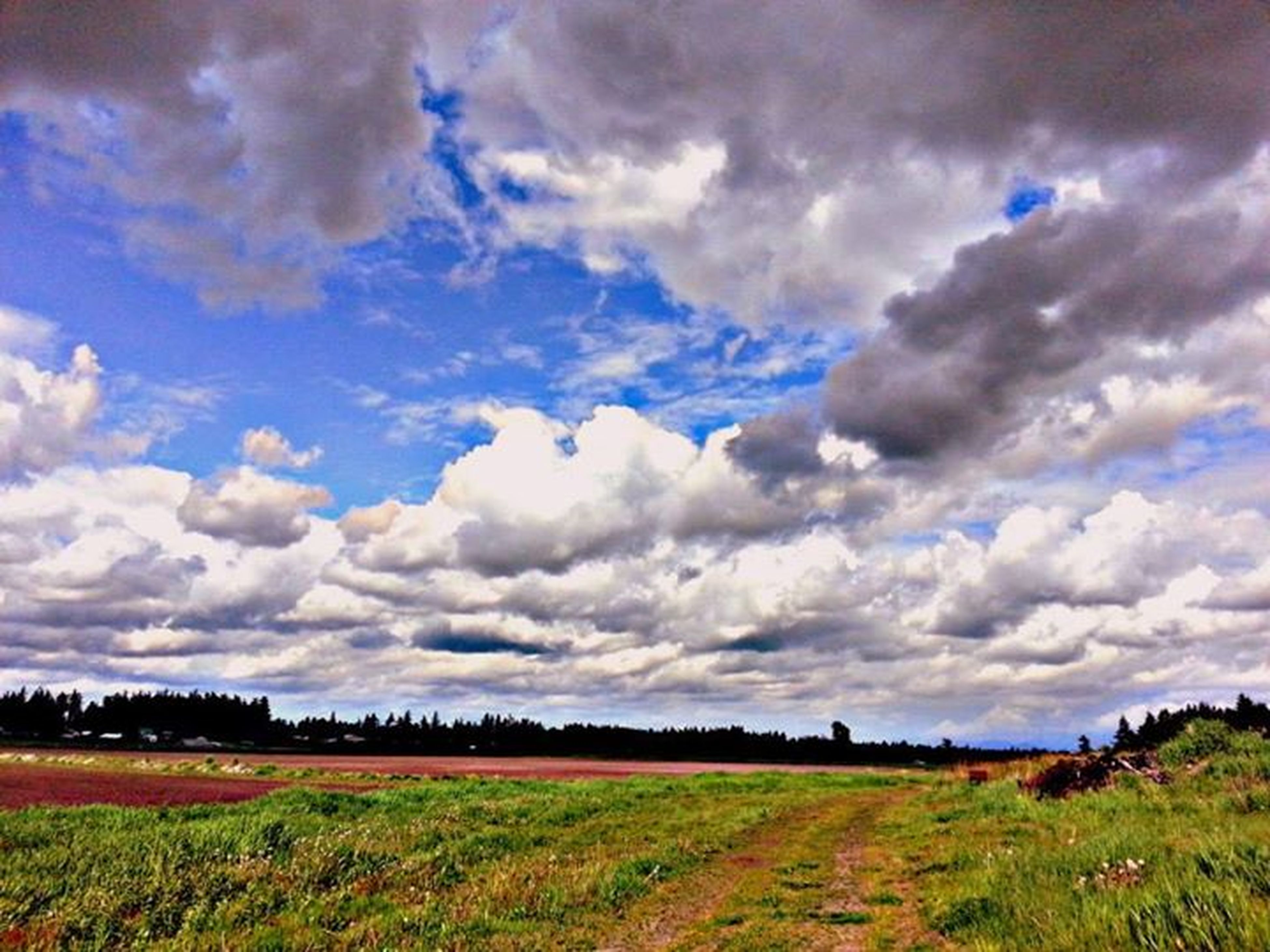 sky, landscape, field, tranquil scene, cloud - sky, tranquility, grass, scenics, beauty in nature, cloudy, nature, cloud, rural scene, growth, agriculture, grassy, horizon over land, idyllic, farm, green color