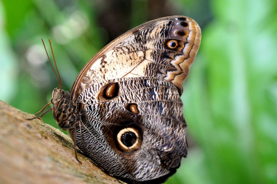 Beautiful stock photos of butterfly, Beauty In Nature, Butterfly, Close-Up, Day
