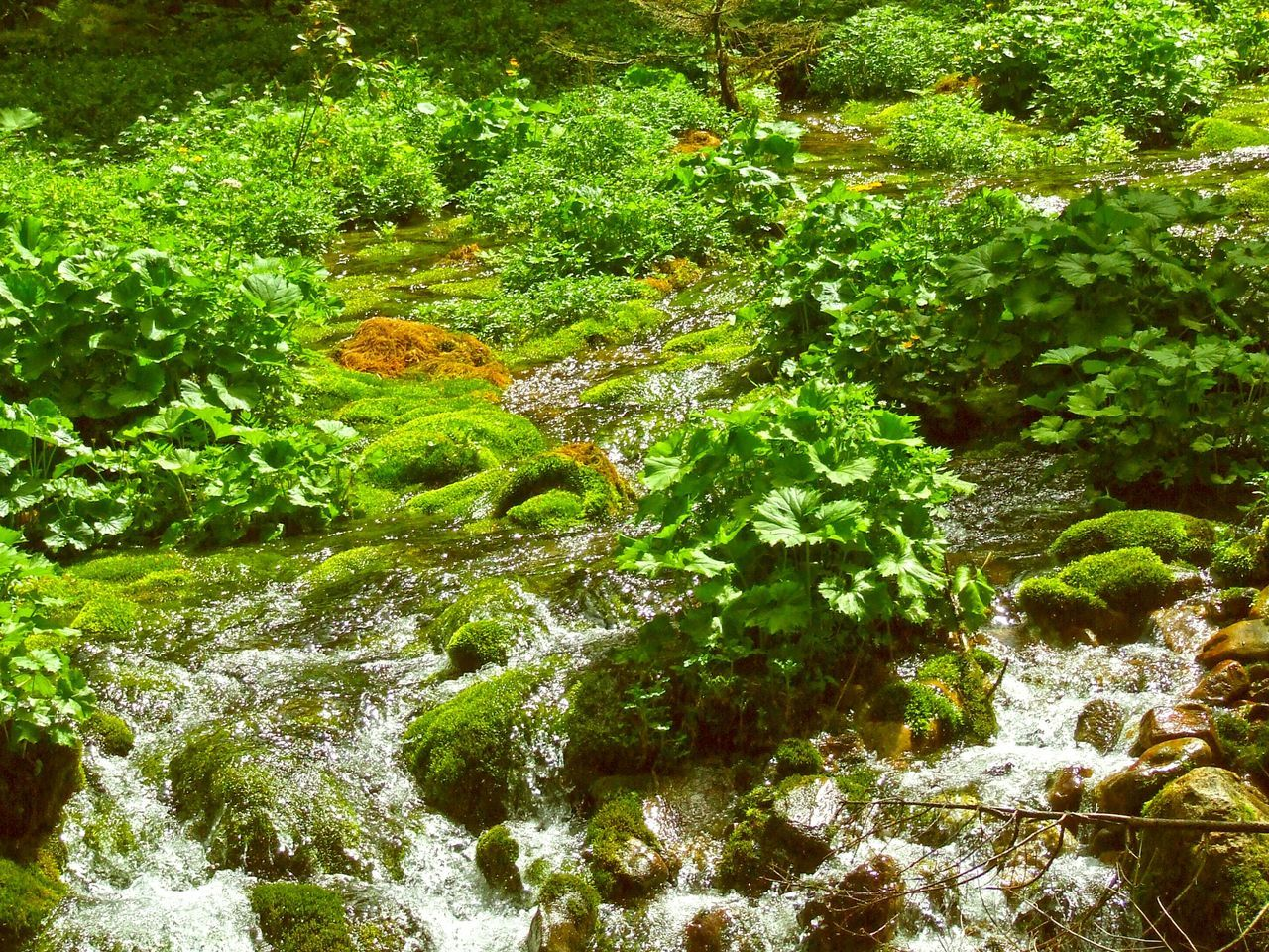 plant, nature, water, forest, beauty in nature, tranquility, lush foliage, green color, green, growth, tranquil scene, outdoors, no people, tree, day, waterfall