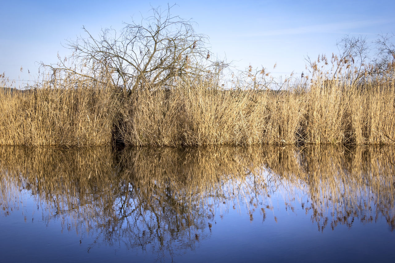 Reflections in the water, with reed and trees. Beauty In Nature Blue Blue Sky Brandenburg Day Have Lake Nature No People Non-urban Scene Nuthe Outdoors Reeds Reflection River Scenics Sky Tranquil Scene Tranquility Tree Water