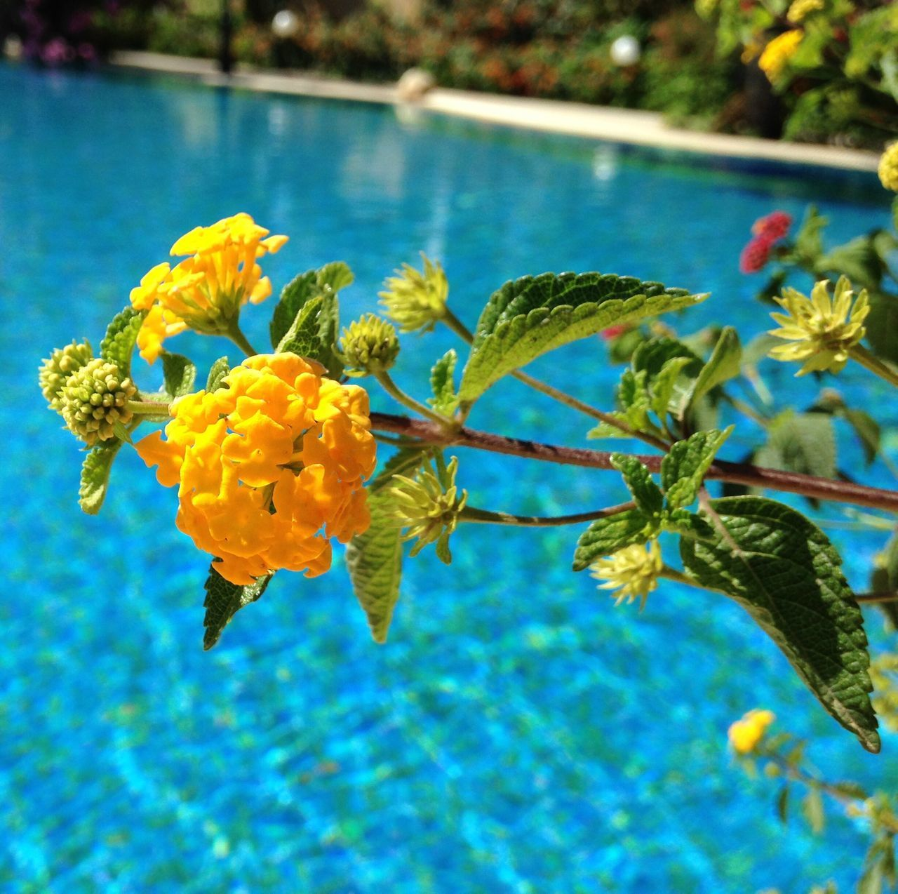 Beautiful stock photos of pool, Beauty In Nature, Blossom, Botany, Bunch Of Flowers