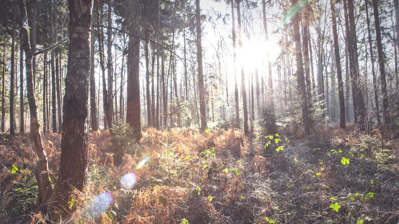 My Favorite Places are in this Forest ❣ Sunlight Sunbeam Lens Flare Landscape_Collection Forestwalk EyeEm Nature Lover Nature's Diversities Showcase: February Plants And Flowers TreePorn 3XSPUnity I LOVE PHOTOGRAPHY Simple Quiet Love EyeEm Gallery Wintertime Sunlight Germany Canon Full Frame Miles Away Naturelovers Lieblingsteil Fall Beauty