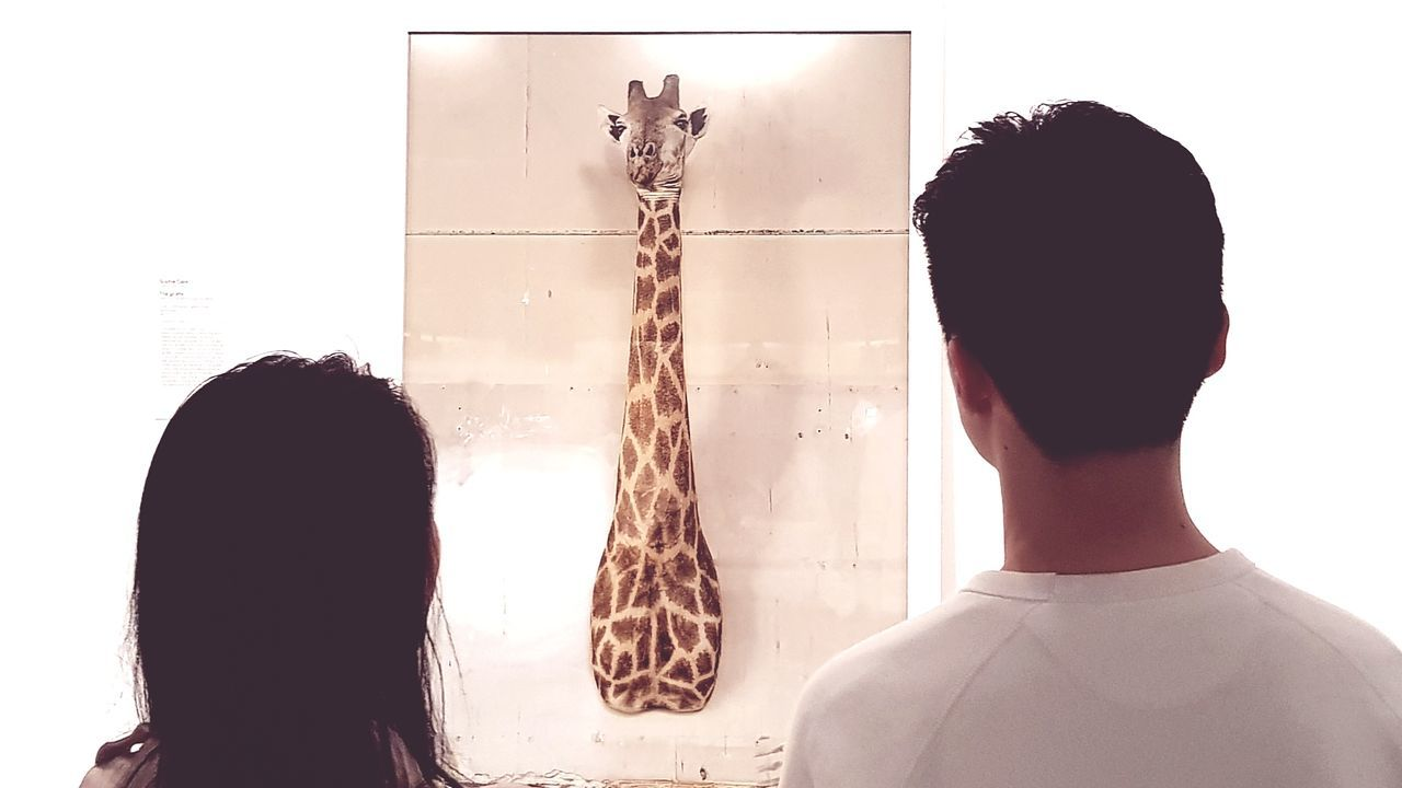 Rear View Standing Art Gallery Giraffe Melbourne Face Off Face To Face
