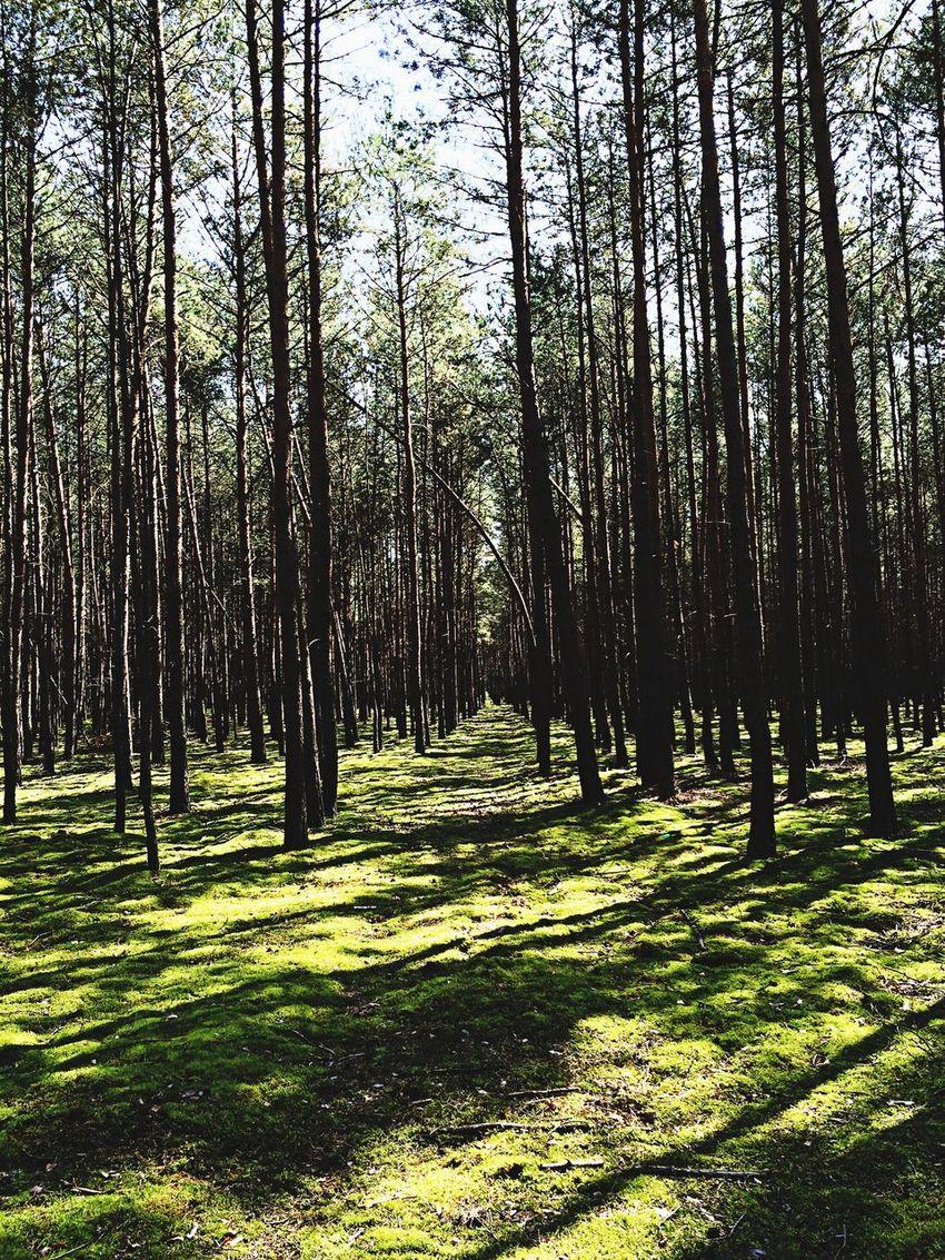 We lesie Woods Welesie