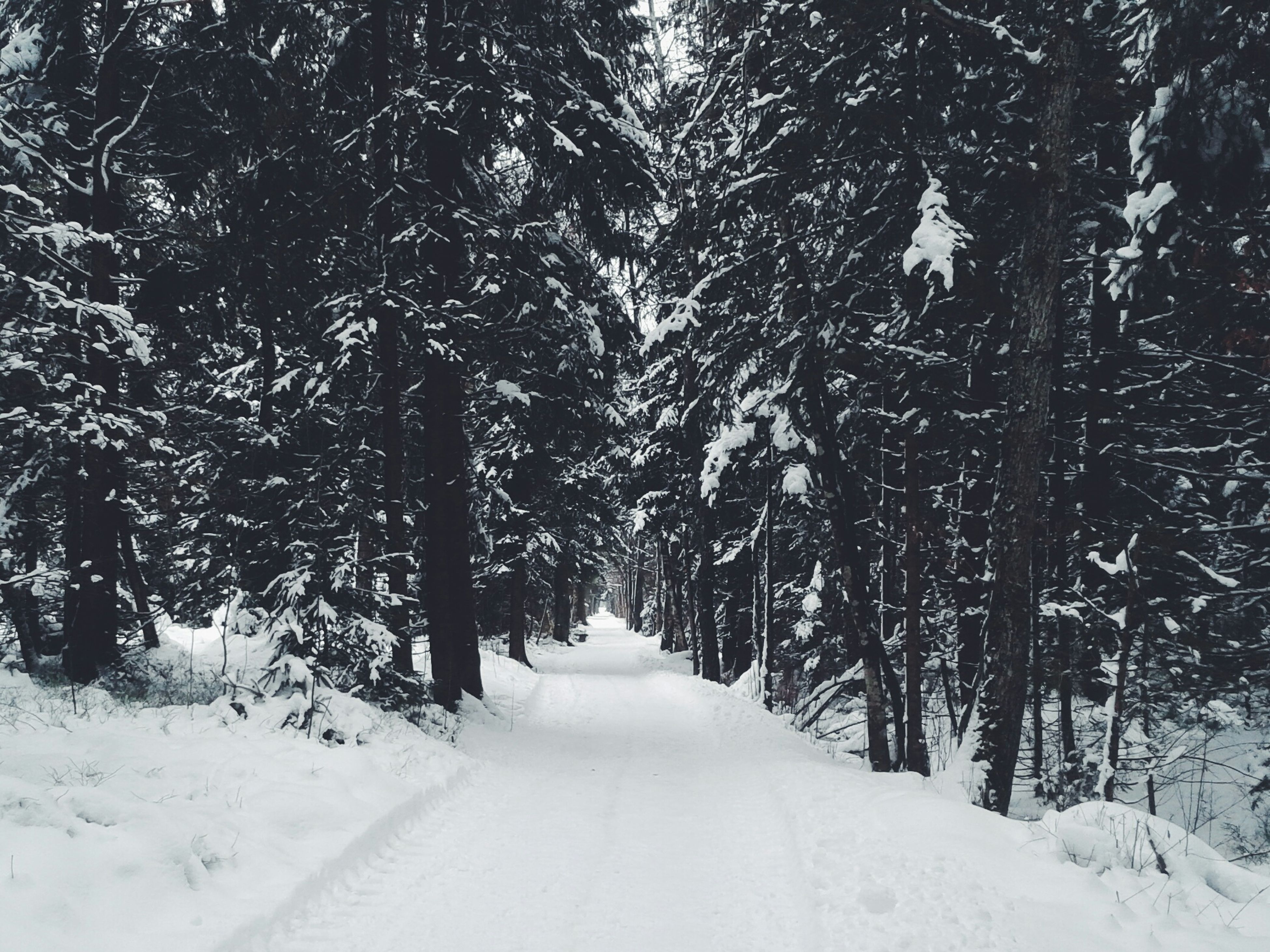 snow, the way forward, winter, cold temperature, tree, diminishing perspective, vanishing point, season, covering, tranquility, nature, weather, tranquil scene, road, white color, forest, beauty in nature, covered, scenics, growth
