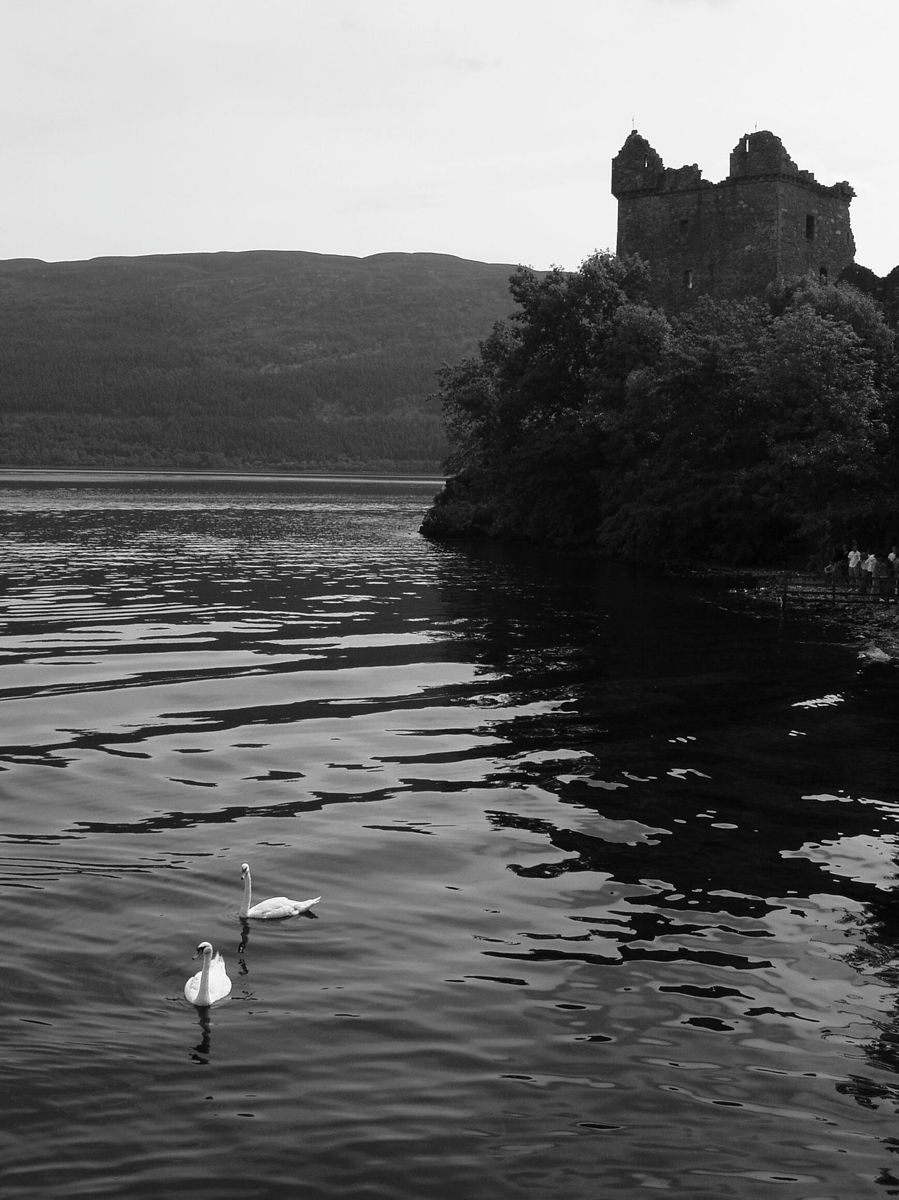 Learn And Shoot: Balancing Elements Learn & Shoot: Balancing Elements Blackandwhite Photography Black And White Loch Ness UrquhartCastle Urquhart Castle Swans Reflections In The Water Reflection_collection Relaxing Travel Catch The Moment Old Castle Castle Scotlandlover Scotland The Great Outdoors - 2016 EyeEm Awards