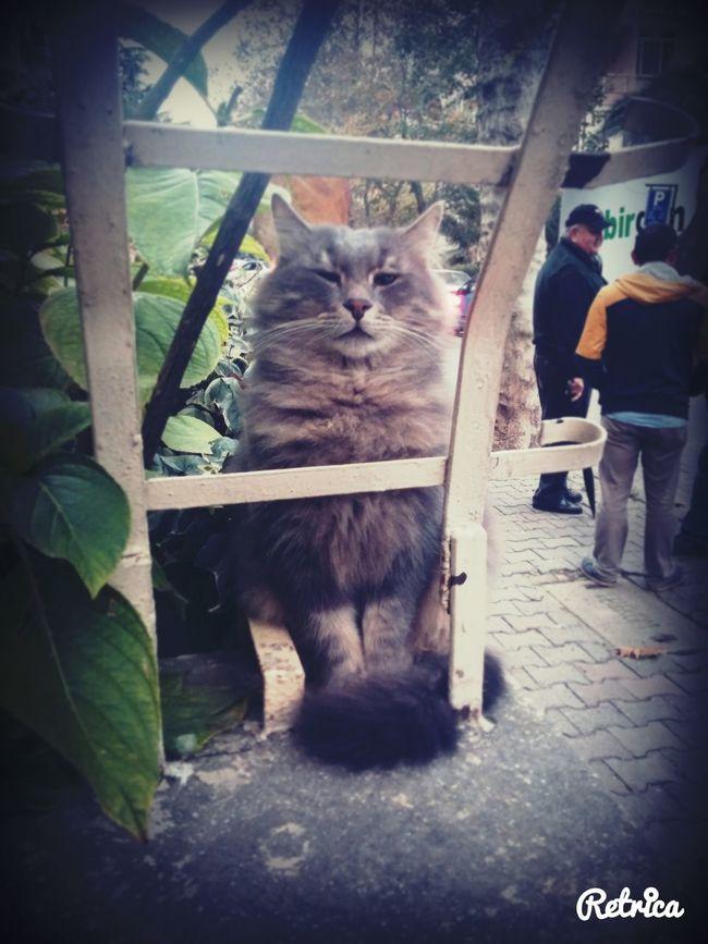 Kime bu tribin duman efendii Cats Catoftheday Sweety  Trip