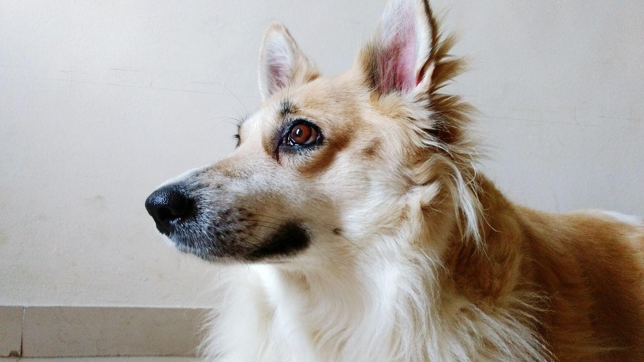 Beautiful stock photos of bora bora, pets, animal themes, one animal, domestic animals