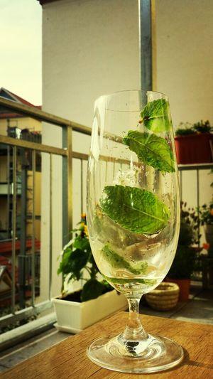 Blätterspiel. Blättersturm im Wasserglas. Wassermale. Minzgeflüster. Enjoying Life Hanging Out Macro Water