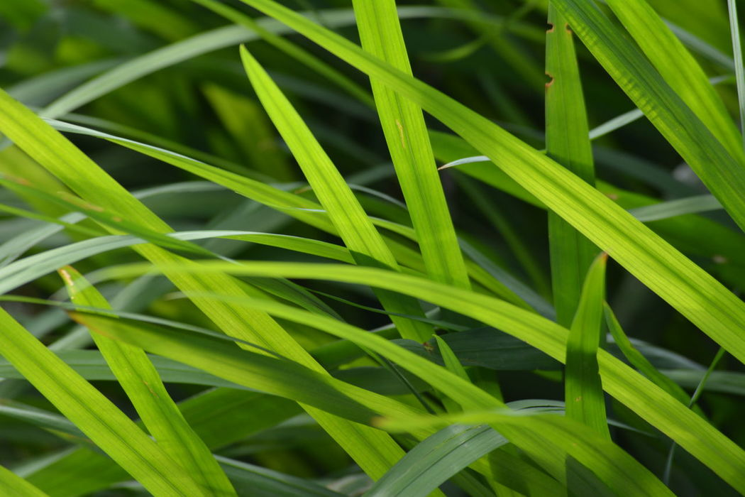 Backgrounds Beauty In Nature Blade Of Grass Close-up Color Detail Full Frame Grass Green Color Growing Growth Imageoftheday Just Clicking Just Taking Photos Macro Beauty Majestic Nature Majestic_macros Nature Nature Colors Nature Photography Perfect Moment PicturePerfect Plant Popularphoto Shotoftheday