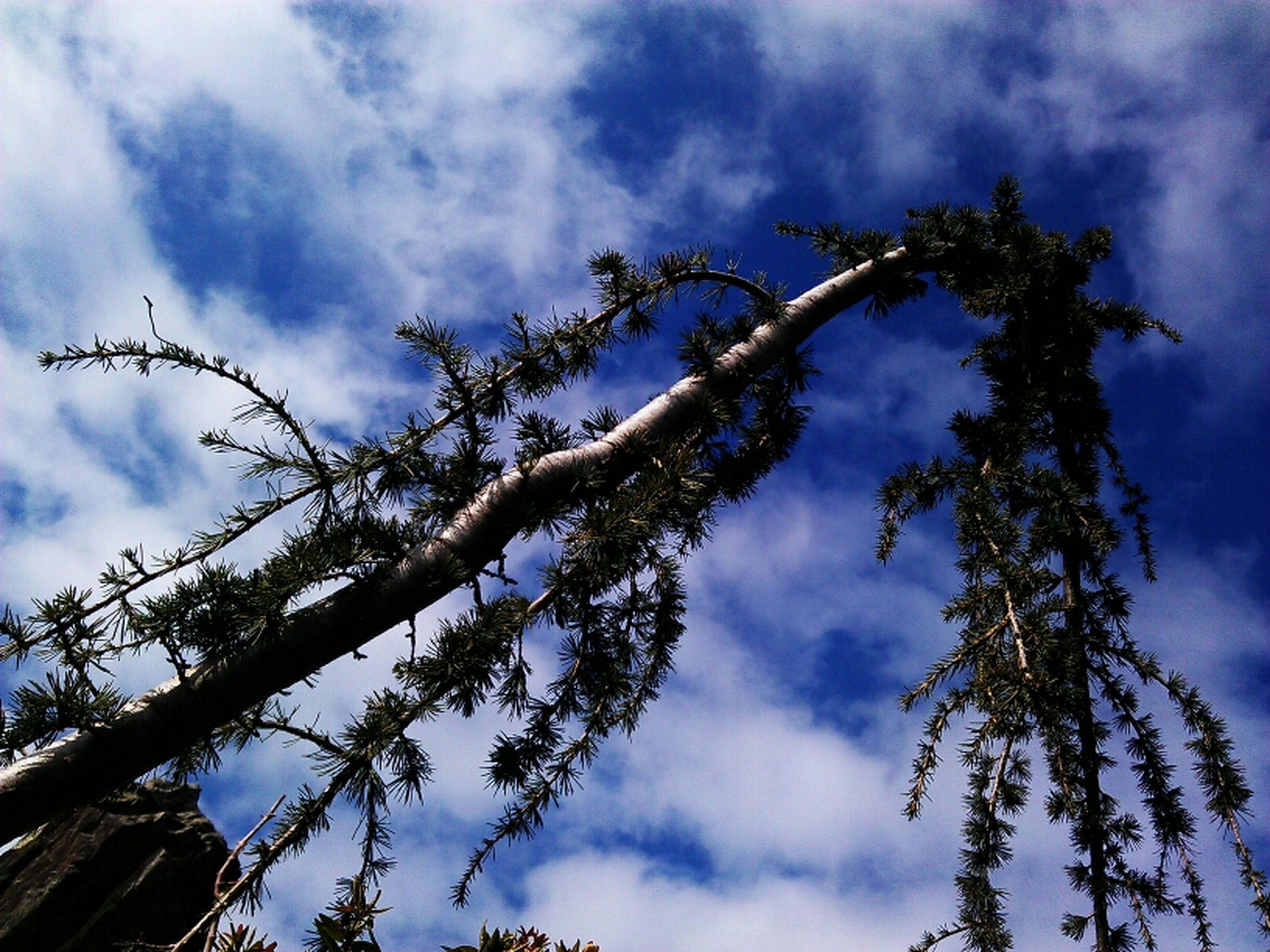 low angle view, sky, cloud - sky, cloudy, tree, cloud, nature, tranquility, growth, beauty in nature, silhouette, outdoors, branch, day, no people, blue, high section, weather, scenics, overcast