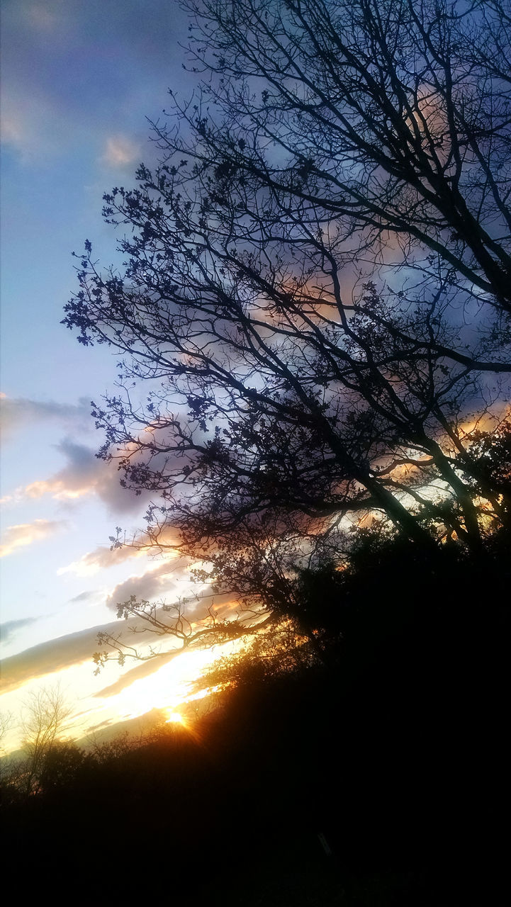 sunset, nature, tranquil scene, tree, tranquility, beauty in nature, sky, scenics, no people, sun, sunlight, cloud - sky, silhouette, outdoors, low angle view, landscape, branch, day