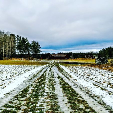Winter green. Sweden Sweden-landscape Sweden Nature Snow Agriculture Agricultural Land Perspective Path Track Cloud - Sky Rural Scene Day Nature Field No People Outdoors Growth