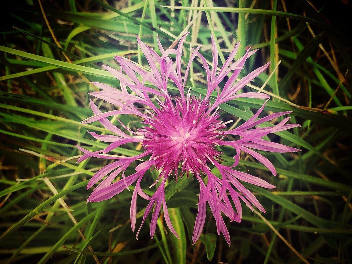 Nature ON EyeEm EyeEm Nature Lover Nature Printemps Fleur Flower