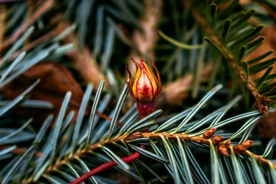 Beautiful stock photos of rosen, Beauty In Nature, Beginnings, Bud, Close-Up