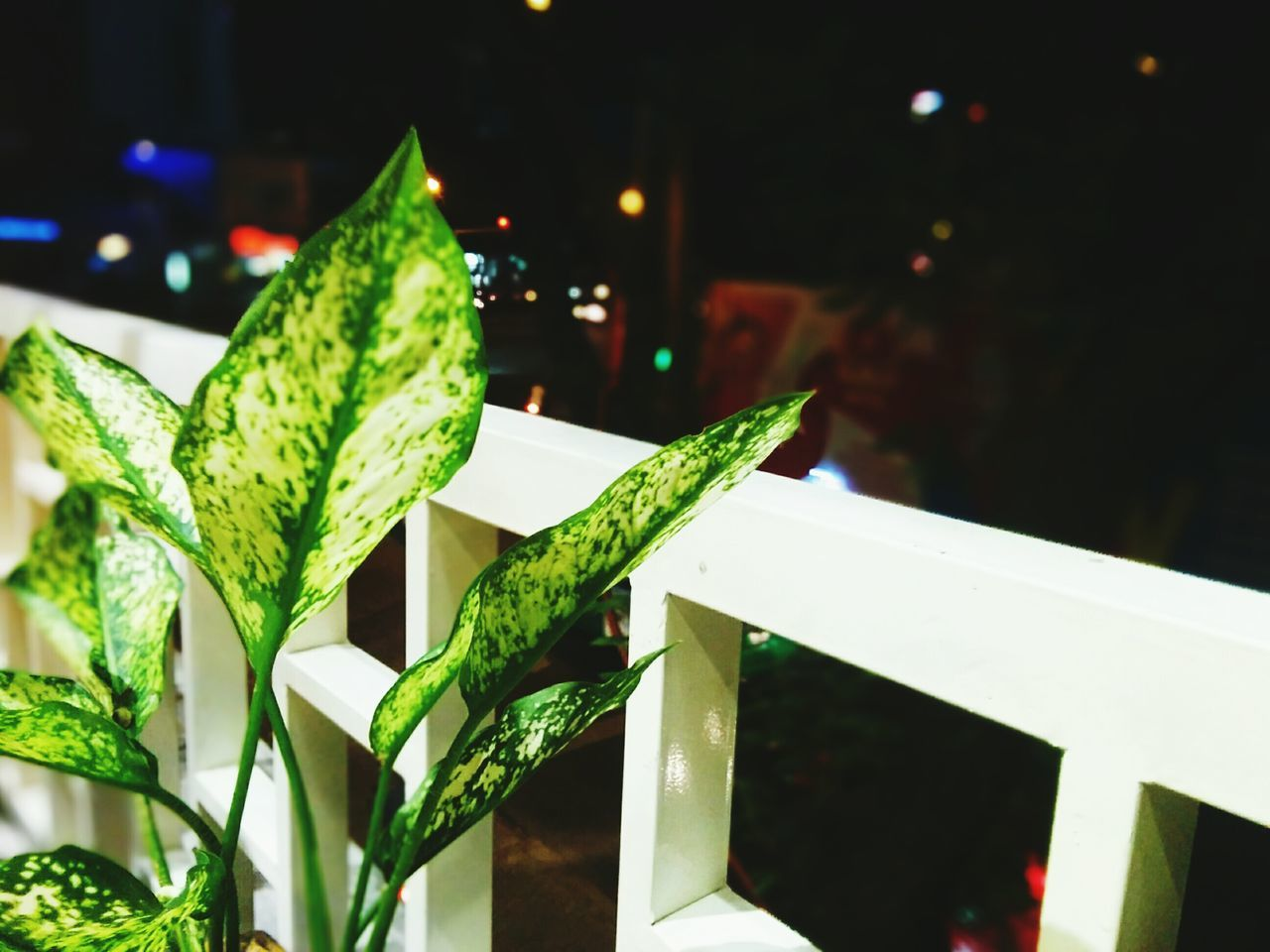 green color, night, close-up, focus on foreground, no people, leaf, outdoors, freshness, illuminated