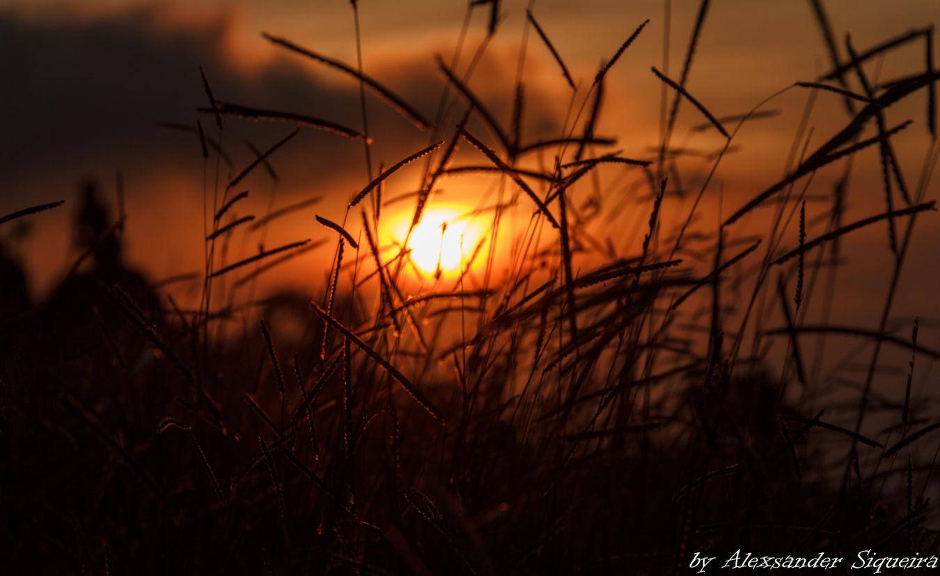 Nature Pico Do Urubu Plant Por Do Sol Scenics Sunset Yellow