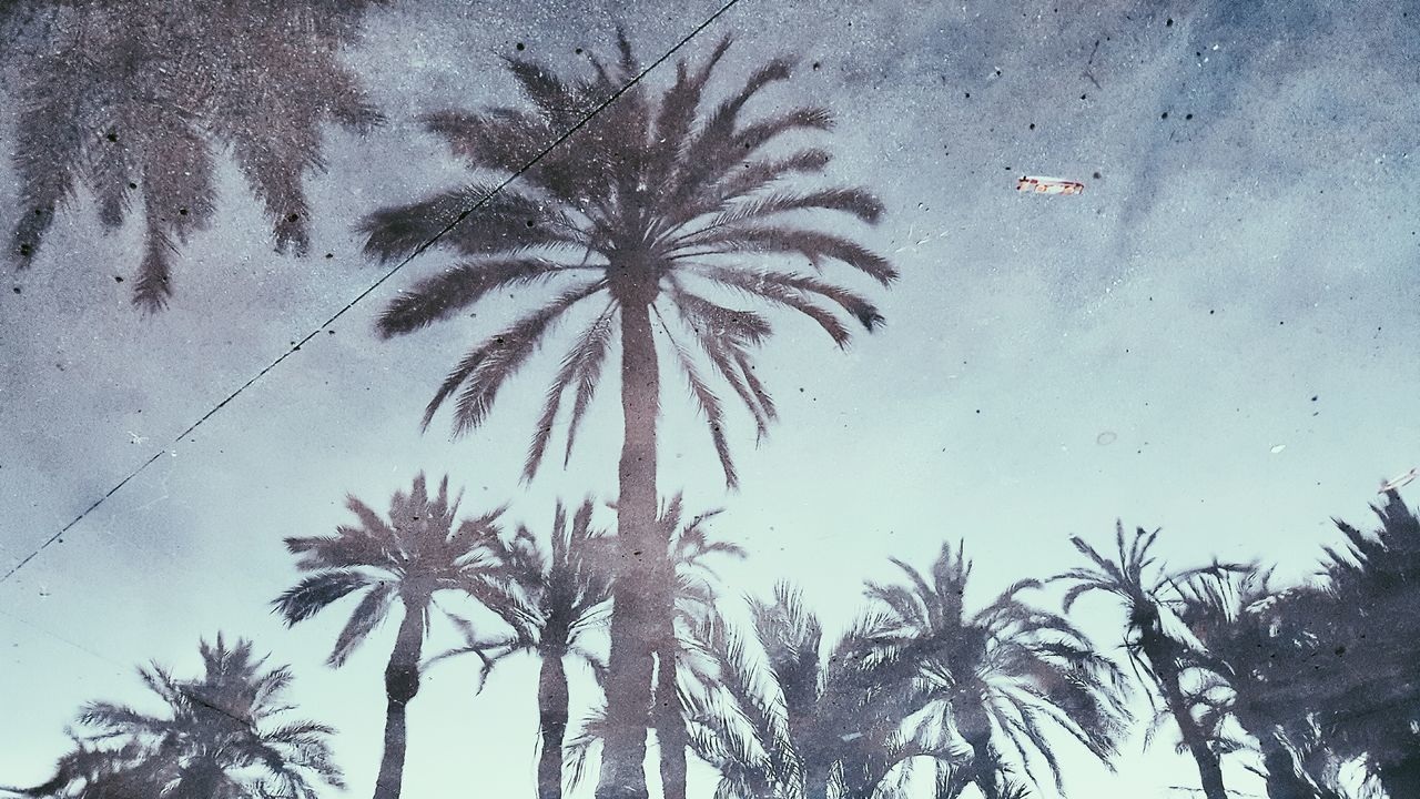 Water Reflections Palm Trees Reflections Reflections In The Water Reflections And Shadows Reflection_collection Palm Tree Palm Tree Silhouette Palm Tree Leaves Blue Night Sky Silhouette Silhouettes Peace And Quiet Original Experiences Original Photography Streetphotography Street Photography Night Photography Eyeem Reflections Eyeem Silhouette 43 Golden Moments Check This Out Taking Photos Lansdcape Landscape_Collection