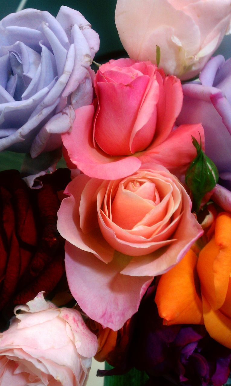 flower, petal, rose - flower, fragility, flower head, beauty in nature, freshness, nature, no people, close-up, outdoors, backgrounds, day, bouquet