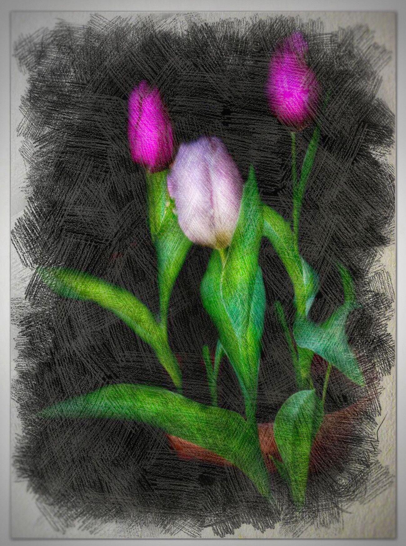 Flowers IPhoneography Photolabpro Painterly Peggyshobbies.com