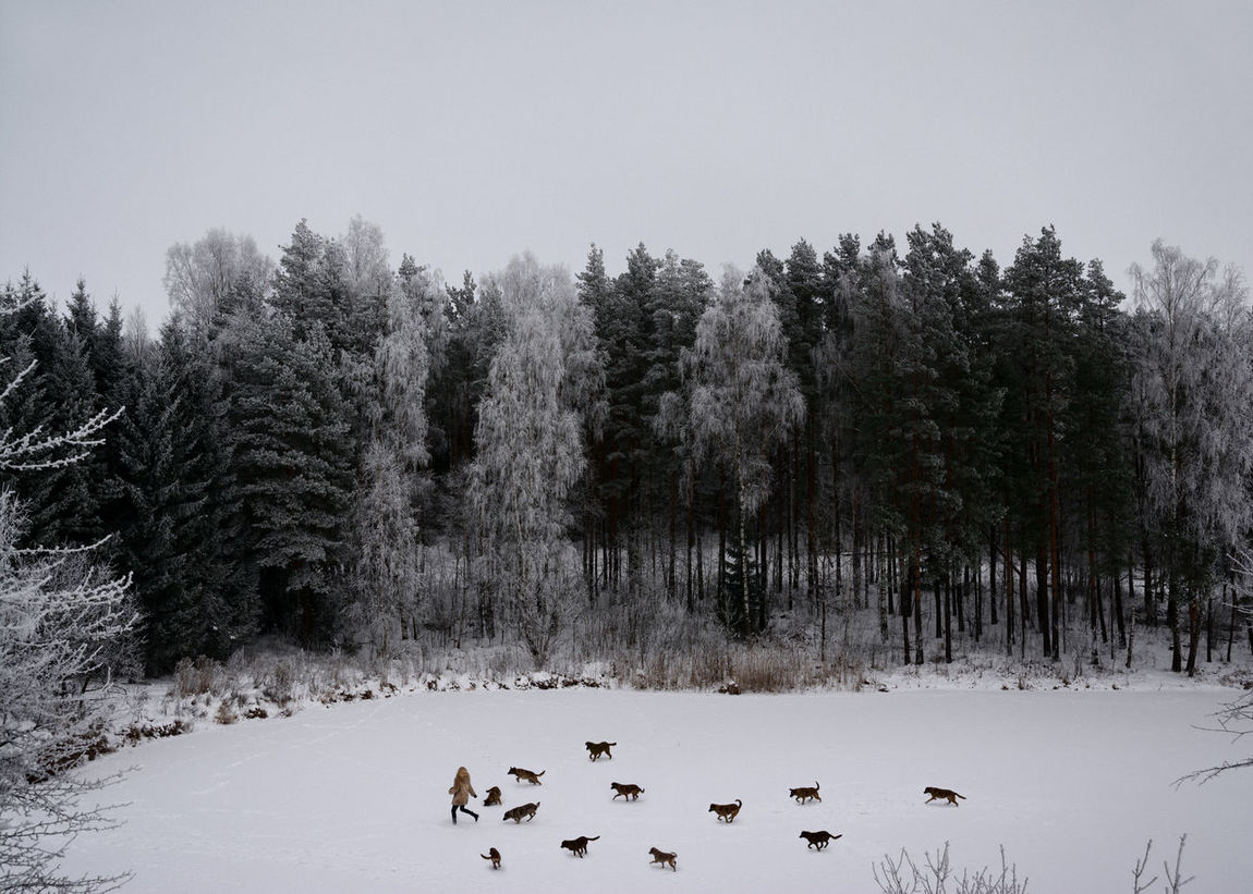 Winter's Tale Alone Attack Danger Dogs Forest Frozen Lake Hunting Linas Was Here Running Girl Snow Winter Wolf Gang Woods