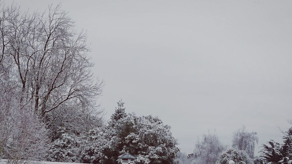 Snow Snow Day White Beautiful Pretty Trees Icy Cold Winter Finally Never Too Late  Showcase: January