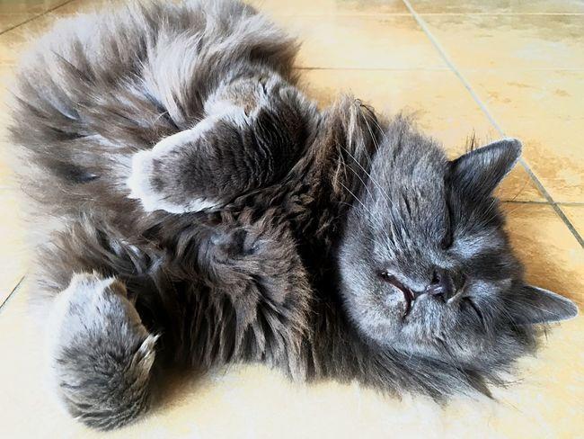 Gatto Gatto😸 Zufolo Cats Cat Cat♡ Cat Lovers