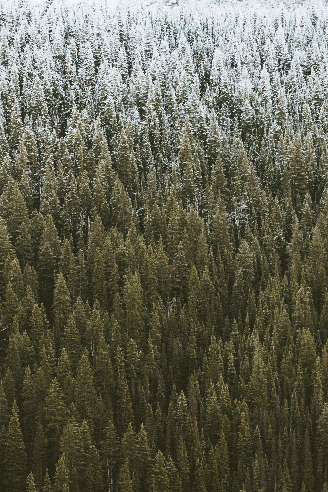 Snow-capped Nature Outdoors No People Backgrounds Textured  Nature Tree Evergreen Snowcapped Alpine Non Urban Scene Winter Cold Temperature Mountain Beauty In Nature Hiking Forest