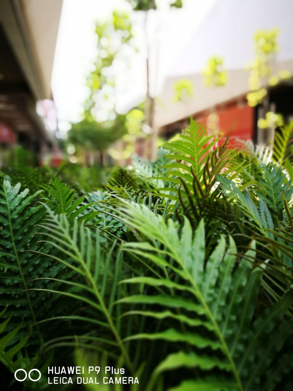 growth, green color, focus on foreground, day, plant, nature, leaf, close-up, no people, outdoors, freshness
