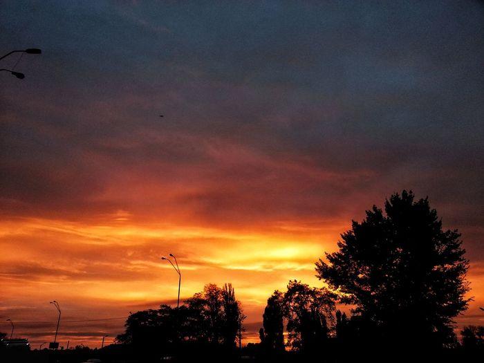 Sky Nature No People Tree Morning Morning Sky Ukraine 💙💛 Sun Fiery Sky