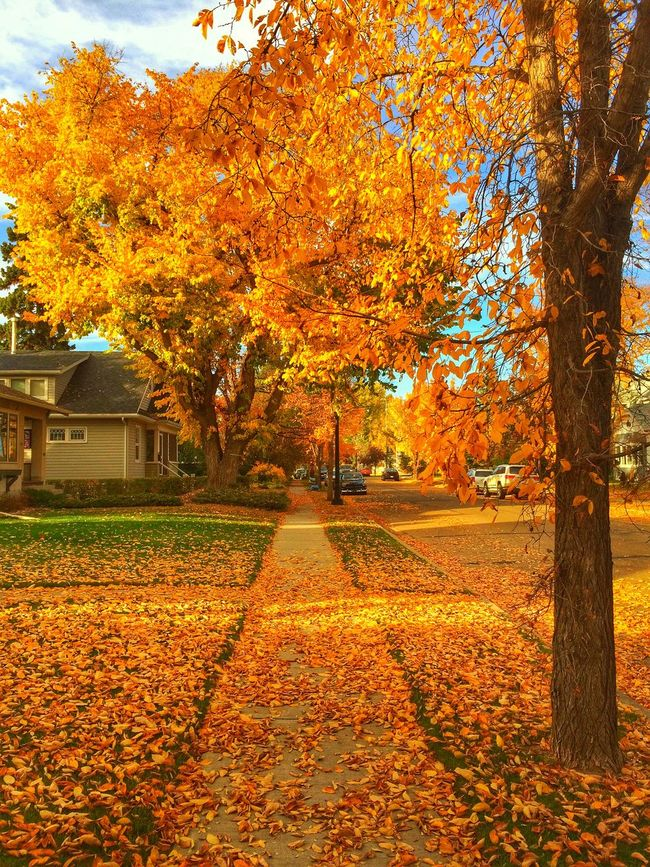 Autumn has arrived. Street Photography Nature Autumn Seasons