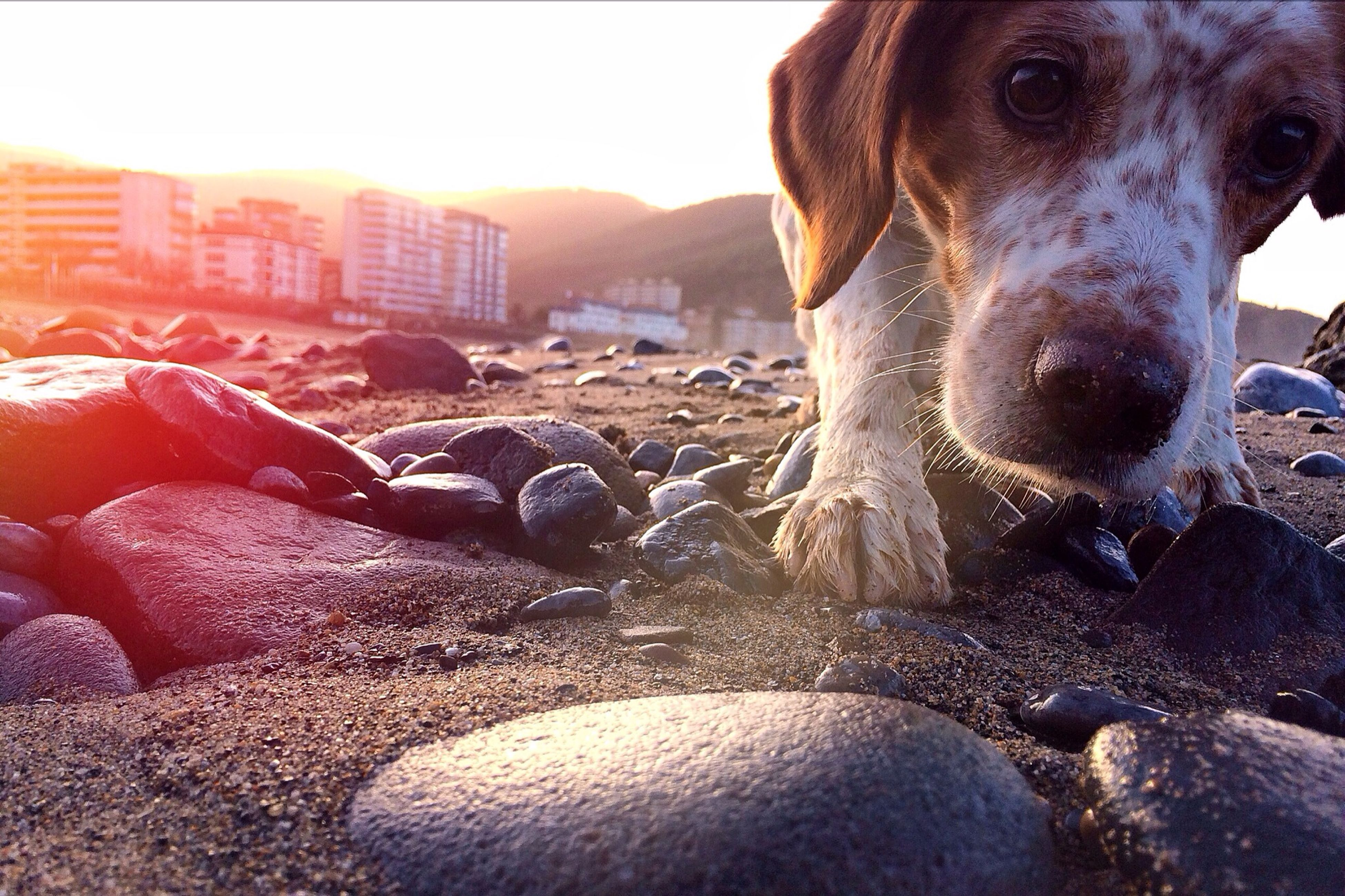 domestic animals, mammal, animal themes, dog, pets, sunlight, one animal, close-up, day, outdoors, clear sky, no people, sky, part of, sunny, built structure, beach, nature, focus on foreground, sunbeam