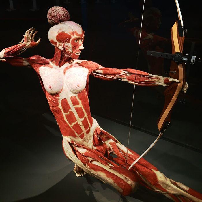Gunther Von Hagen's Human Plastination museum BodyWorldsin Berlin, Germany. Bodyworlds  Gunther Von Hagens Human Body Oggl