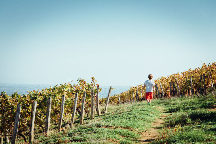 Child Children Vineyard Vine - Plant Autumn Leisure Activity Healthy Lifestyle Trekking Walking Around Weekend Activities Adults Only Only Men People Adult Sky Men Real People Clear Sky Occupation Full Length Grass Day Nature Outdoors Growth Rear View One Person Scenics Rural Scene Agriculture