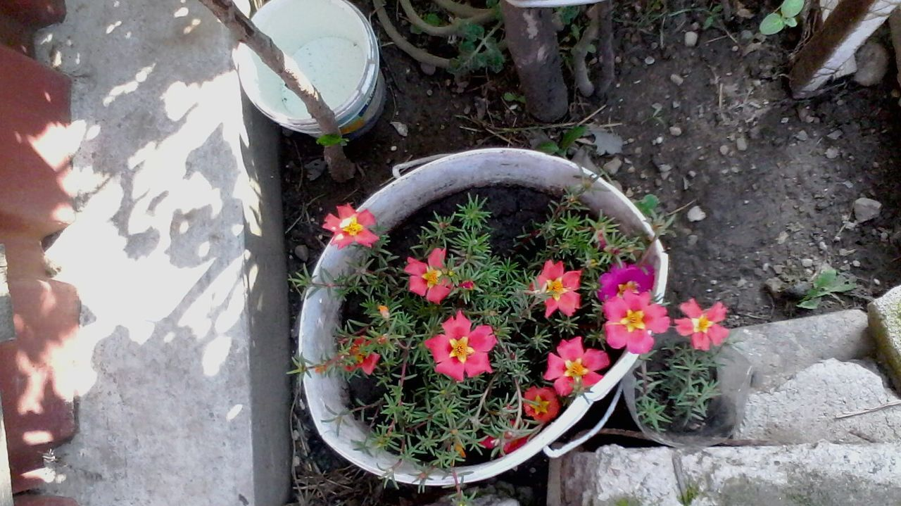 A Bird's Eye View Plant Potted Plant Beauty In Nature Garden Blossom Nature Blooming Selective Focus In Bloom Flower Outdoors Pot Plant Day Flowering Flowers Ghetisoara Romanian  Ionitaveronica Wolfzuachis @wolfzuachis Eyeem Market Eyeemphoto No People Looking Down
